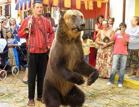[Image: dancing-bear.jpg]