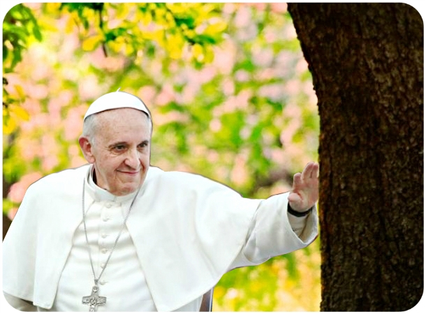 Pope Francis tree